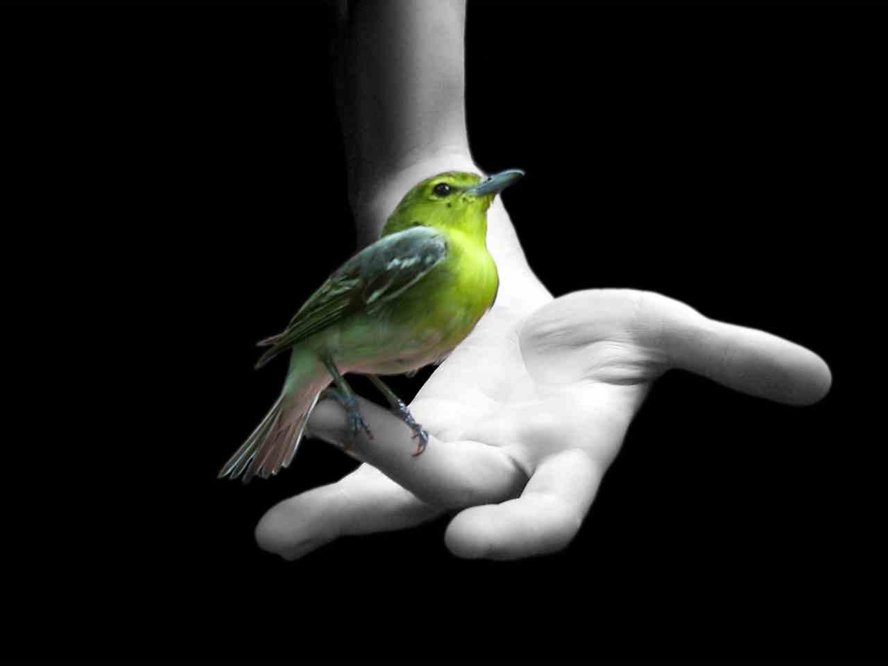 bird_on_hand